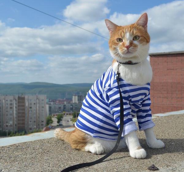 кот мматроскин