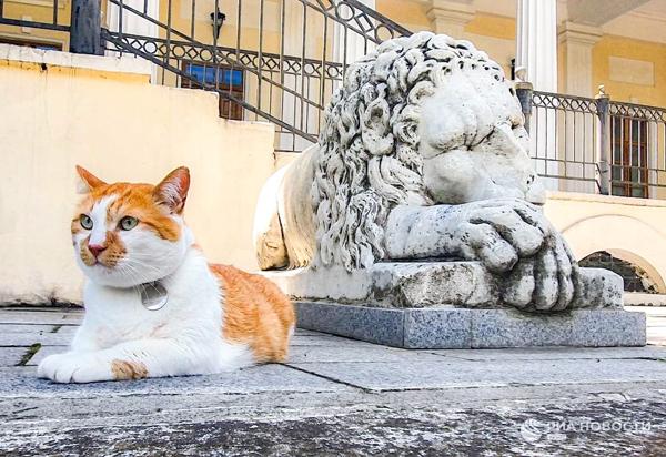 кот-мостик-лев
