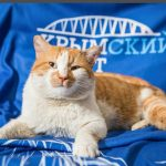 Крымский Мостик — самый знаменитый кот России!