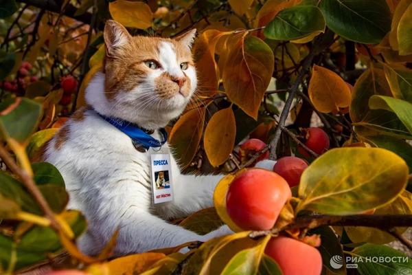 кот-осень-8