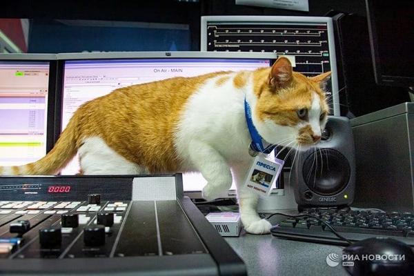 кот-пресс- подменяет коллегу в нашей радиостудии