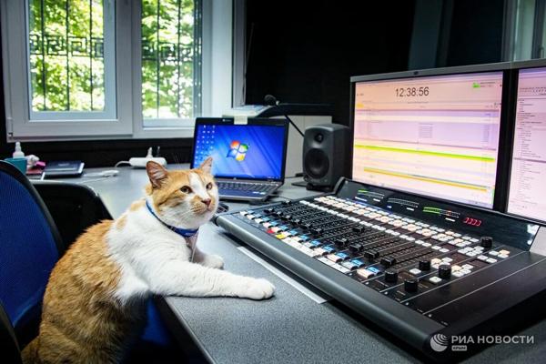 кот-пресс- подменяет коллегу в радиостудии