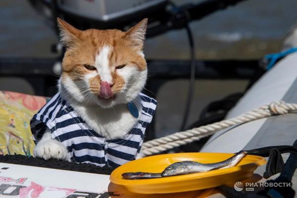 кот-рыбалка