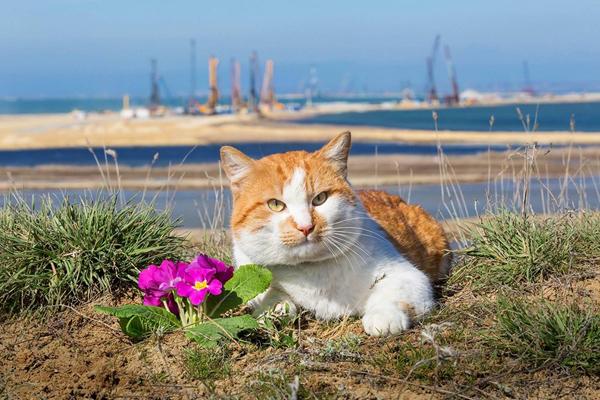 кот-стр-мостик-весна
