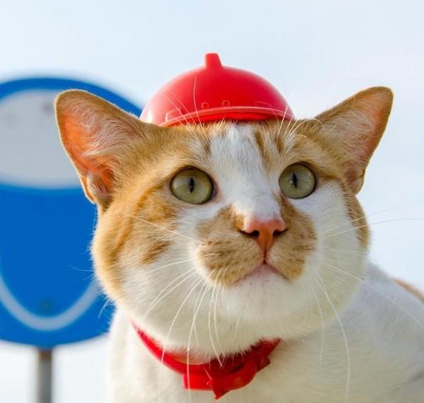 кот-стр-мостик-кот