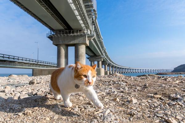 кот-стр-под мостом