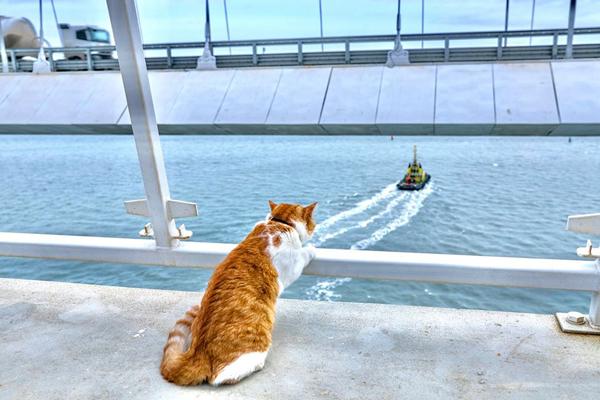 кот-стр- провожает пароходы