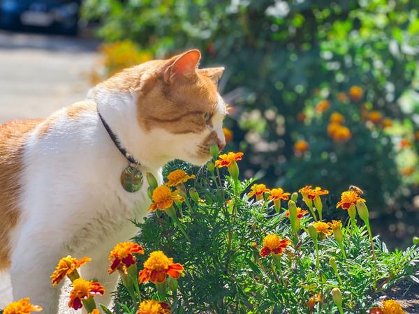 --кот-цветы--