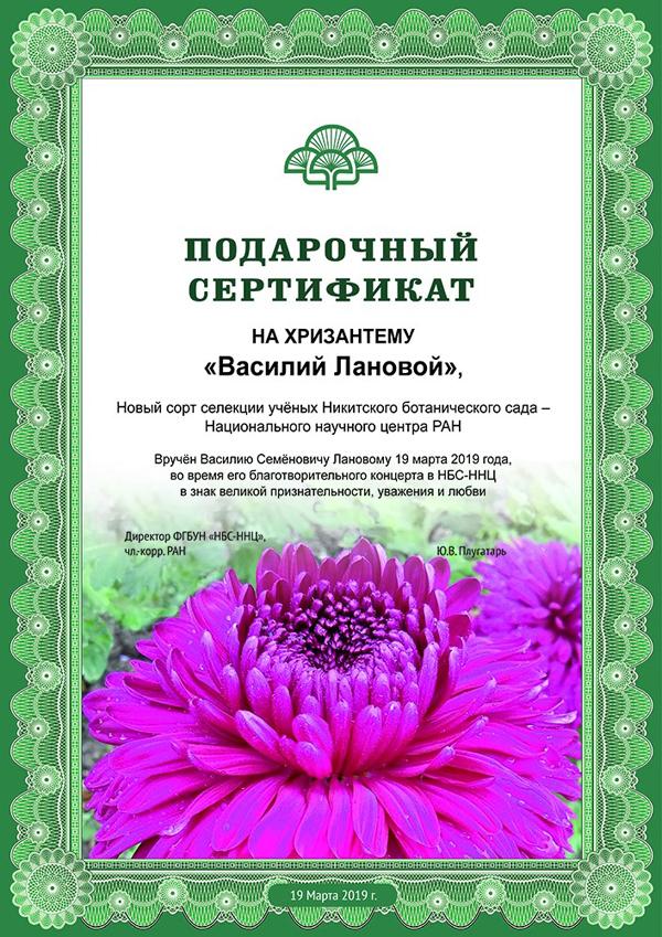 хризантема-19 марта-2019 Лановой
