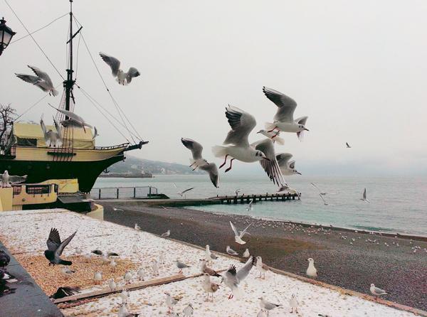 ялта-чайки