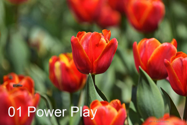 1-Power-Play