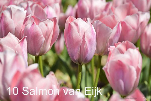 10-Salmon-van-Eijk