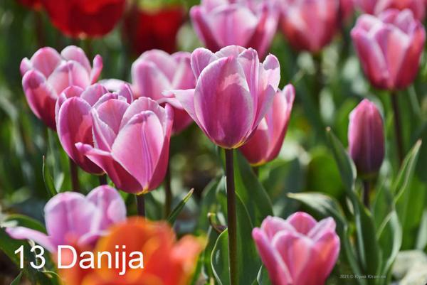 13-Danija