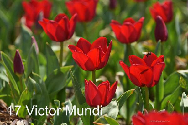 17-Victor-Mundi