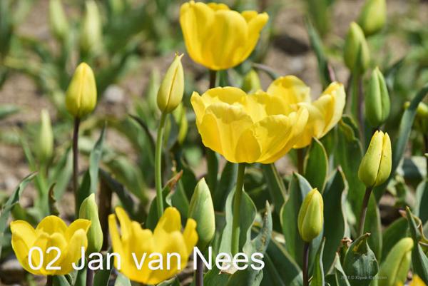 2-Jan-van-Nees