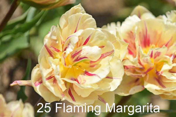 25-Flaming-Margarita