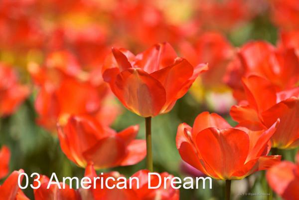 3-American-Dream