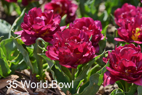 35-World-Bowl