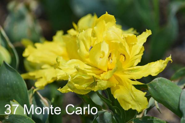 37-Monte-Carlo