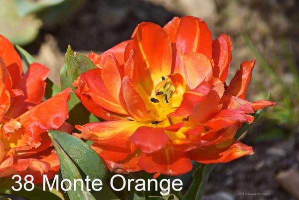 38-Monte-Orange