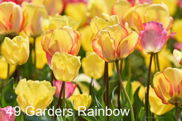 49-Garders-Rainbow