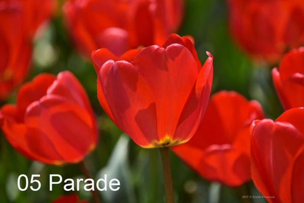 5-Parade