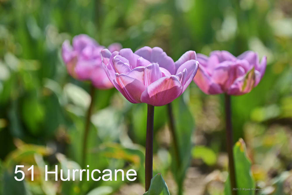 51-Hurricane