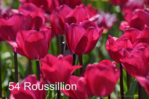 54-Roussillion