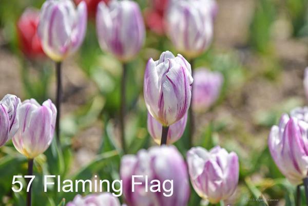 57-Flaming-Flag