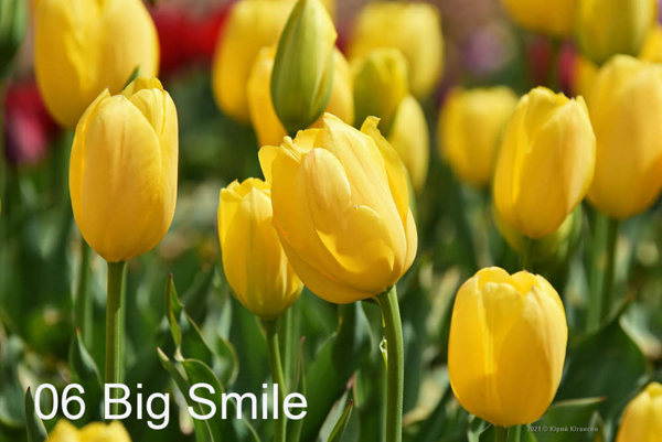 6-Big-Smile