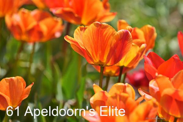 61-Apeldoorns-Elite