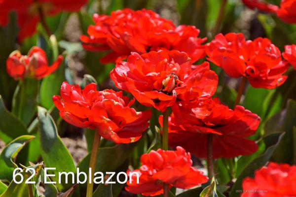 62-Emblazon