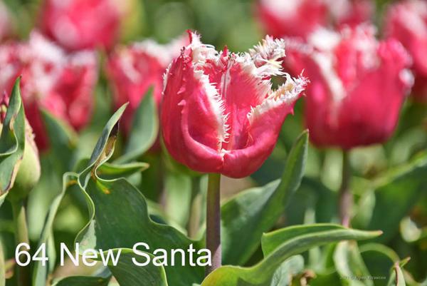 64-New-Santa