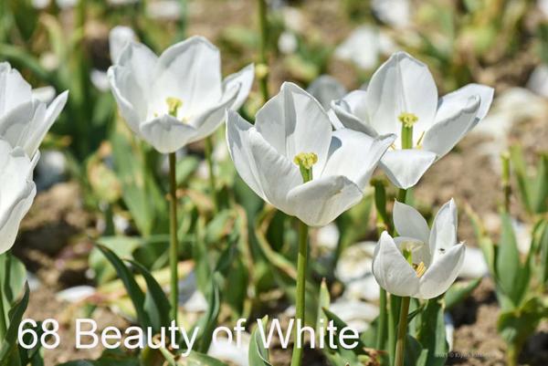 68-Beauty-of-White