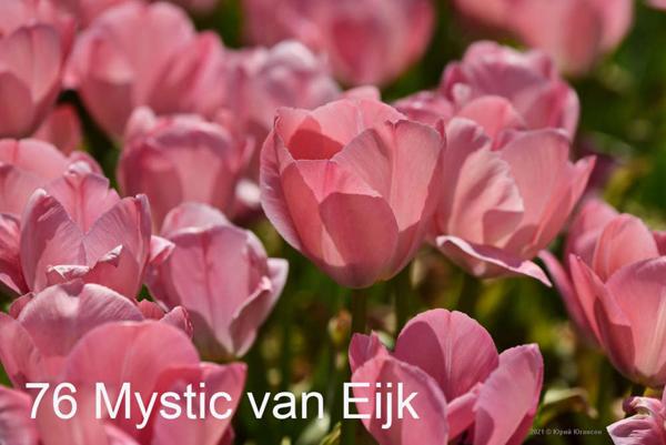 76-Mystic-van-Eijk