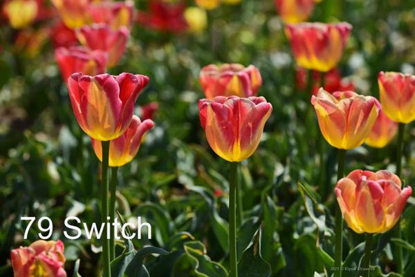79-Switch