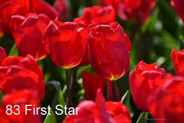 83-First-Star