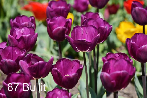 87-Bullit