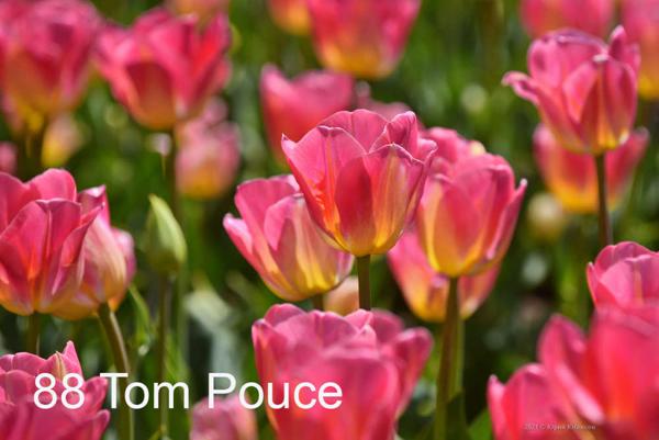 88-Tom-Pouce