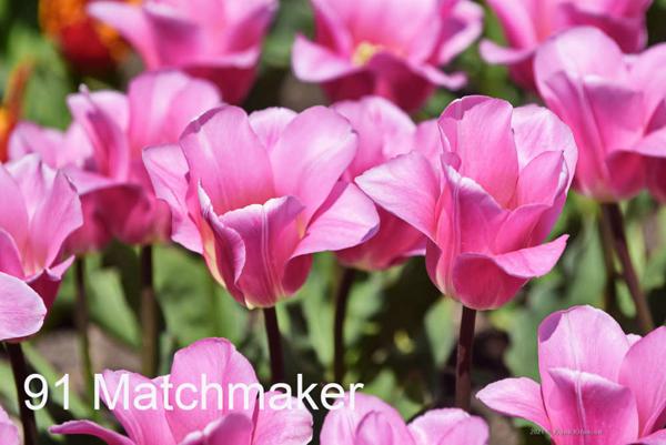 91-Matchmaker