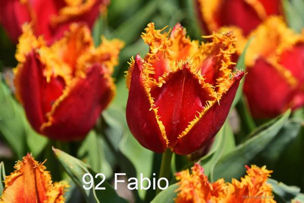 92-Fabio