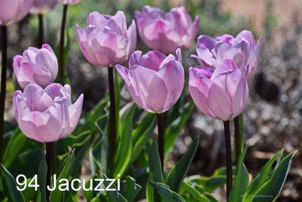 94-Jacuzzi