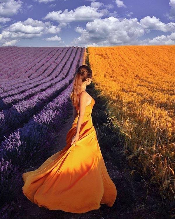 Лаванда и пшеница