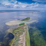 Царство птиц на «Лебяжьих островах» в Крыму