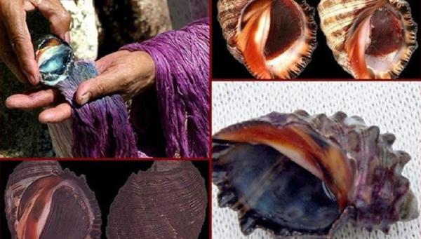 античный пурпур